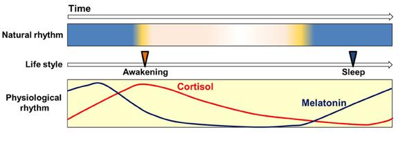 cortisol-and-melatonin